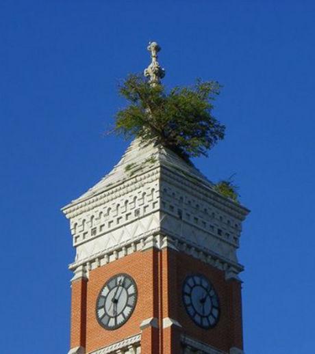 Un arbre pousse sur le palais de justice de greensburg - Sur quoi pousse les ananas ...