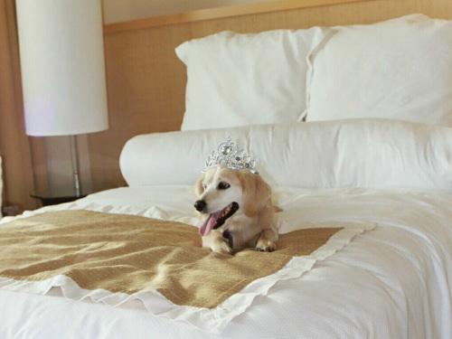 autriche un h tel de luxe propose des chambres pour les chiens. Black Bedroom Furniture Sets. Home Design Ideas
