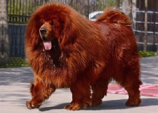 Fabulous On vous présente Big Splash, le chien le plus cher du monde ! SO38