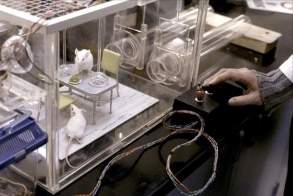 des-scientifiques-ont-implante-des-souvenirs-fictifs-dans-la-memoire-dune-souris