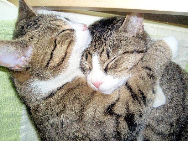 http://www.letribunaldunet.fr/wp-content/uploads/2013/09/cats-hugging.jpg
