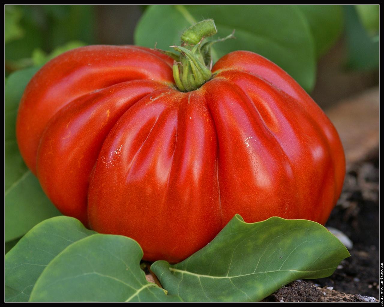 le saviez vous 98 pourquoi la tomate est un fruit et pas un l gume. Black Bedroom Furniture Sets. Home Design Ideas