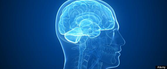 Des scientifiques ont créé un mini-cerveau humain en laboratoire