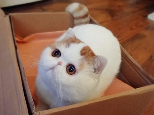 snoopybabe le chat chinois qui voulait faire de l 39 ombre grumpy cat. Black Bedroom Furniture Sets. Home Design Ideas