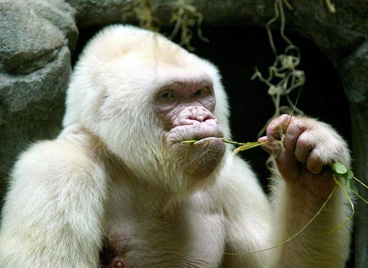 37-somptueux-animaux-albinos-que-la-nature-a-oublie-de-colorer31