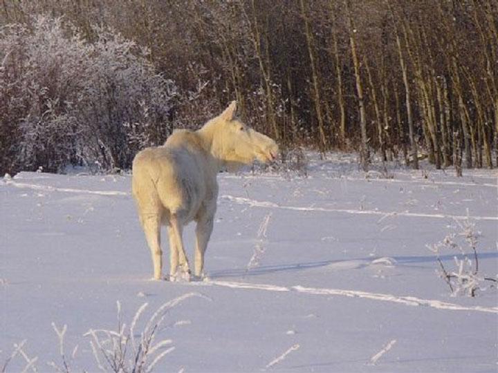37-somptueux-animaux-albinos-que-la-nature-a-oublie-de-colorer8