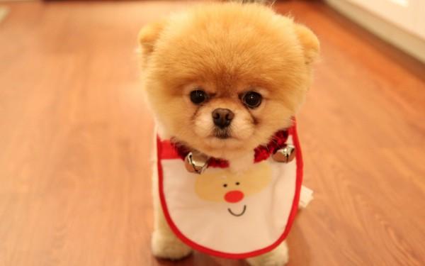 Cute-Dog-Christmas-HD-Wallpaper