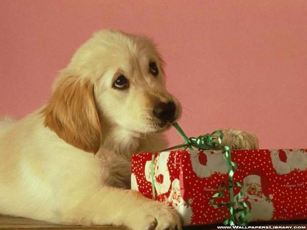 christmas-dog_4211_1024x768