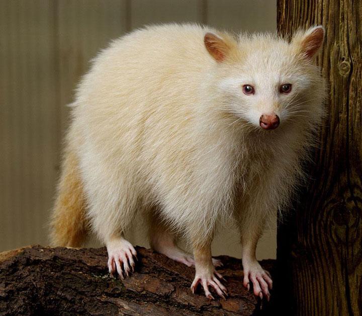 decouvrez-des-animaux-albinos23