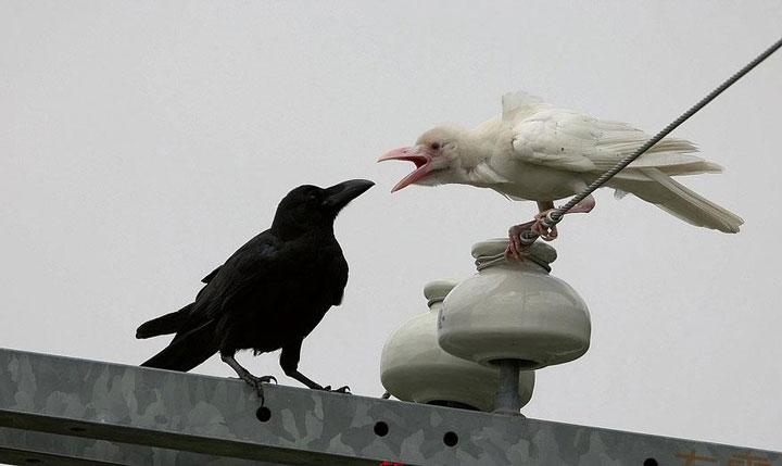 decouvrez-des-animaux-albinos27