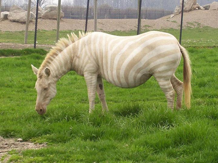 decouvrez-des-animaux-albinos28