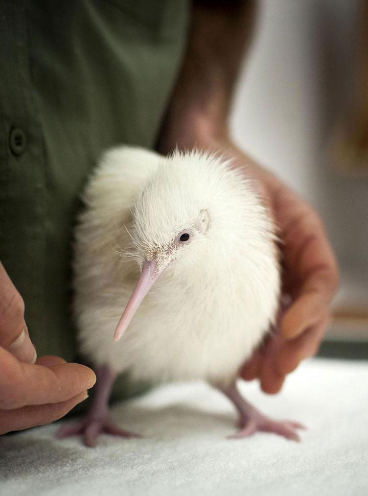 decouvrez-des-animaux-albinos39