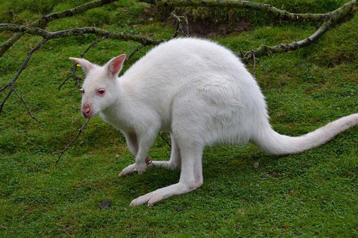 decouvrez-des-animaux-albinos7