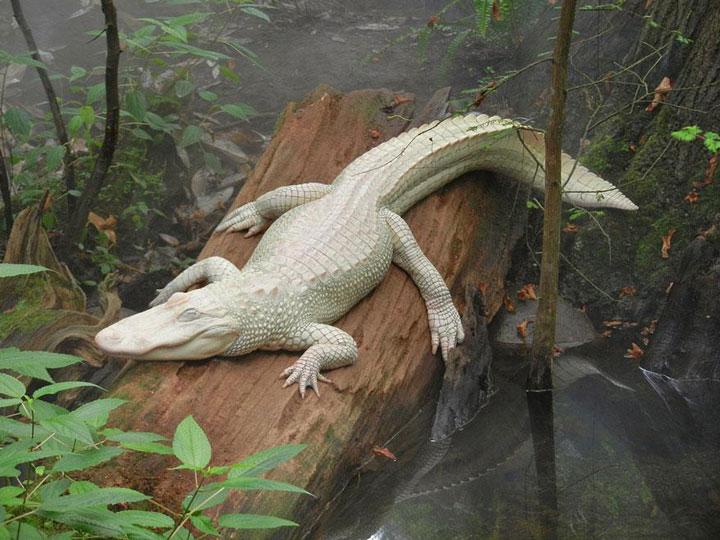 decouvrez-des-animaux-albinos8