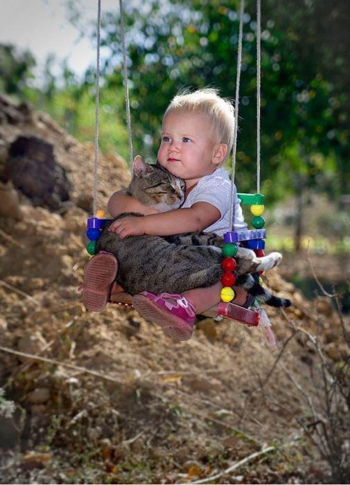 Les chats sont des êtres au grand coeur 01chat-or-505x700