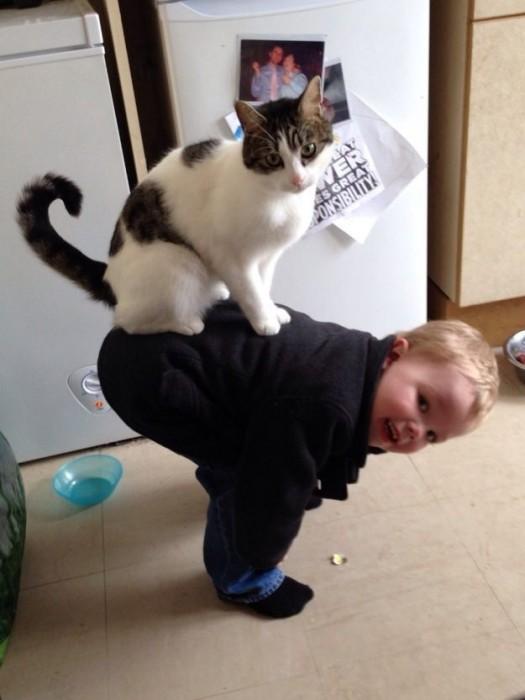 Les chats sont des êtres au grand coeur 04chat-or-525x700