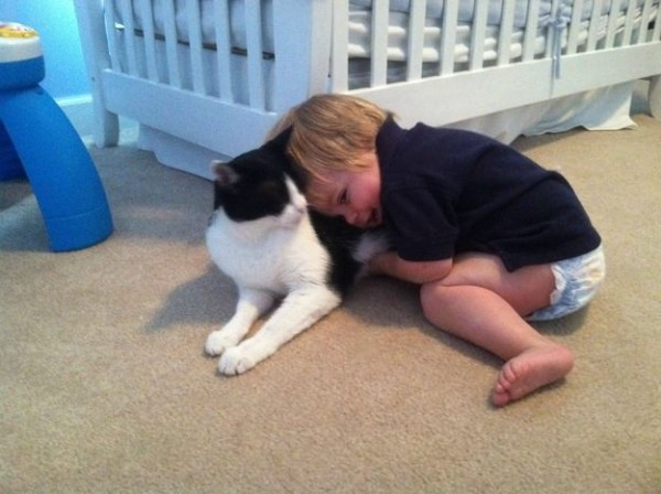 Les chats sont des êtres au grand coeur 05chat-or-600x448