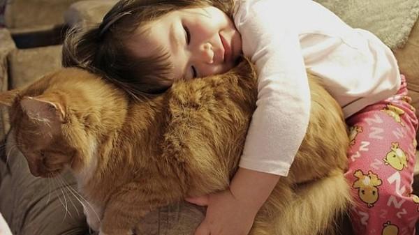 Les chats sont des êtres au grand coeur 09chat-or1-600x337