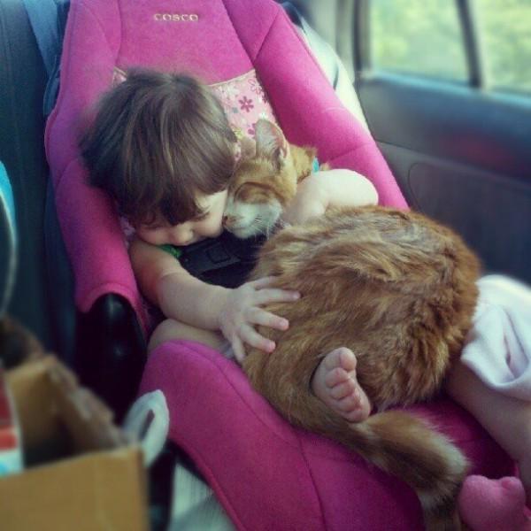 Les chats sont des êtres au grand coeur 11chat-or-600x600