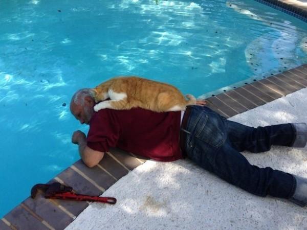 Les chats sont des êtres au grand coeur 15chat-or1-600x450