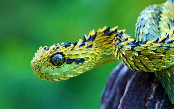 21-animaux-inhabituels-dont-vous-nauriez-jamais-soupconne-lexistence25.jpg