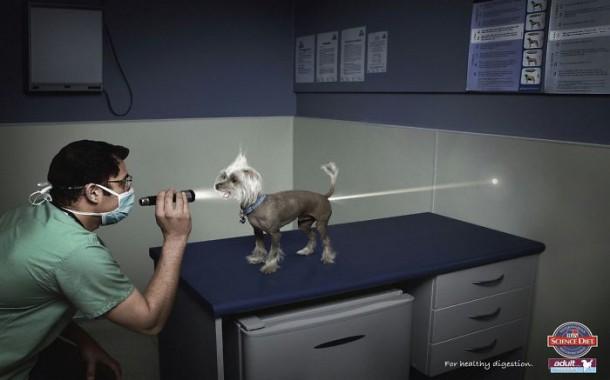 Science Diet Dog Food Pour une digestion saine 2