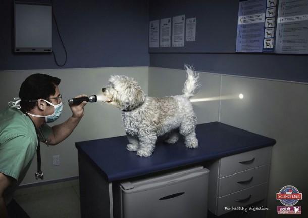 Science Diet Dog Food Pour une digestion saine