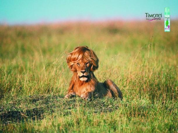 Shampoing Timotei