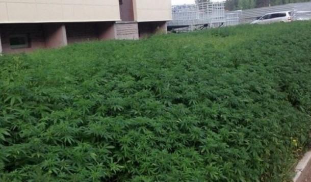 Au lieu de planter de l 39 herbe ces employ s municipaux for Plantation cannabis interieur sans materiel