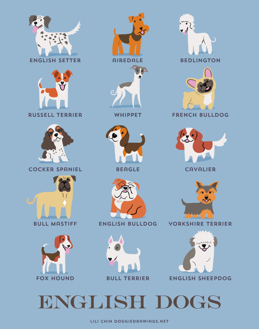 Dogs-Of-The-World-Cute-Poster-Series-Shows-The-Geographic-Origin-Of-Dog-Breeds5__880