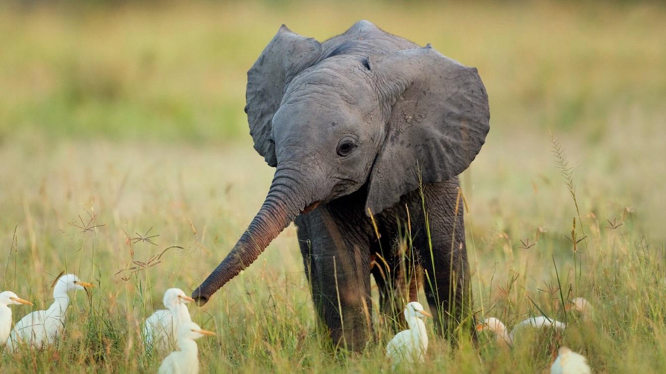 Un éléphant pour Br