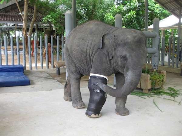 mosha-elephant-parade