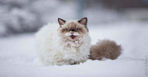 27 animaux qui d couvrent la neige pour la premi re fois vous allez voir ils sont juste - Quand tondre la pelouse pour la premiere fois ...