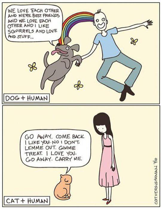 La différence chien/chat...