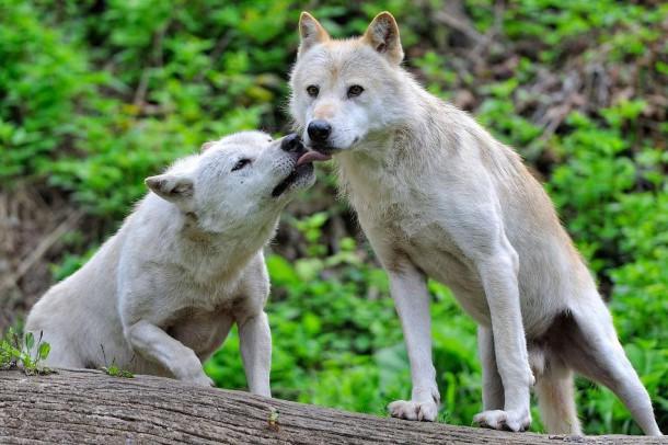 image animaux romantique