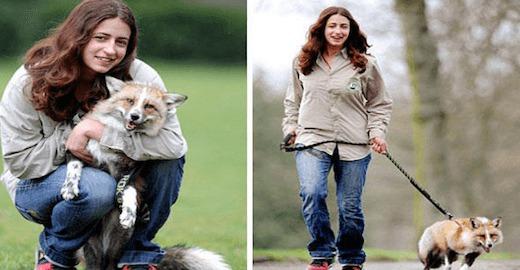 sauv par une jeune femme ce renard se comporte aujourd 39 hui comme un chien. Black Bedroom Furniture Sets. Home Design Ideas