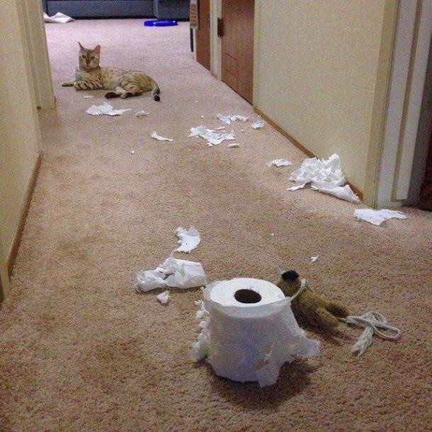 le tribunal du net animaux With ordinary les danger a la maison 17 les hamsters pour tout savoir sur les hamsters