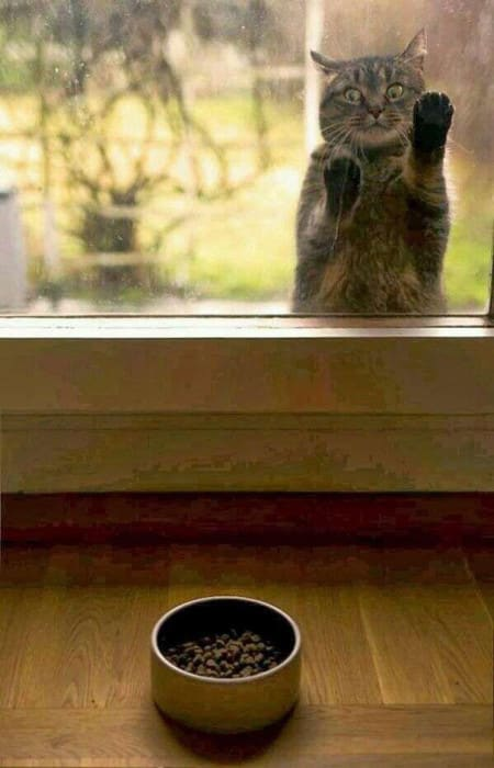 funny-animal-outside-door-let-me-in-21__605