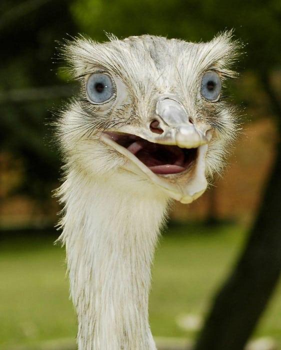 surprised-shocked-animals-funny-11__700
