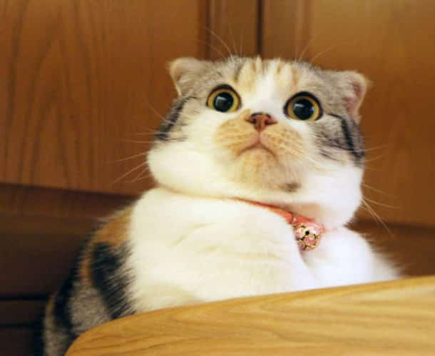 surprised-shocked-animals-funny-27__700