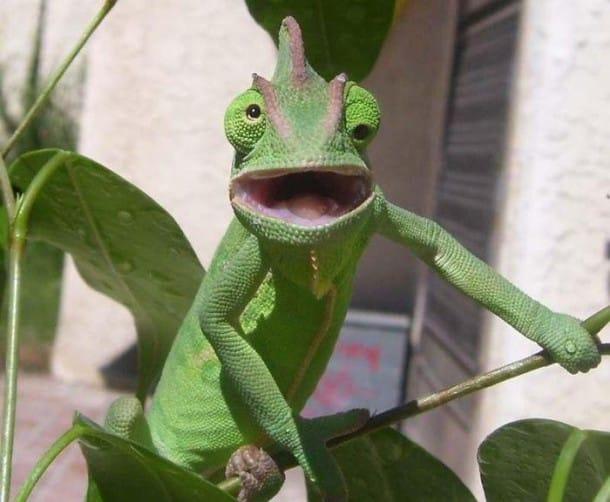 surprised-shocked-animals-funny-2__700