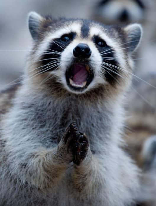 surprised-shocked-animals-funny-37__700