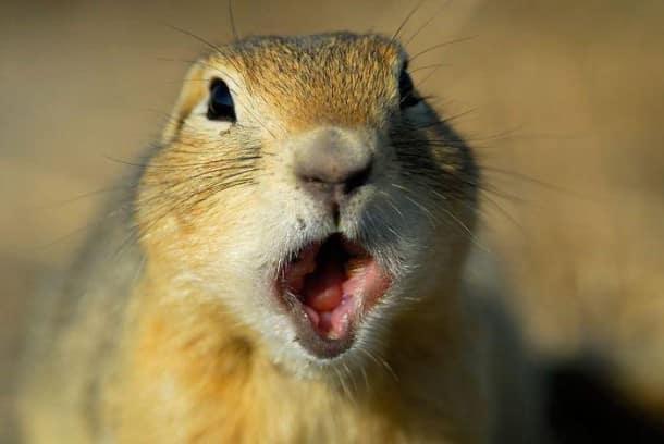 surprised-shocked-animals-funny-38__700