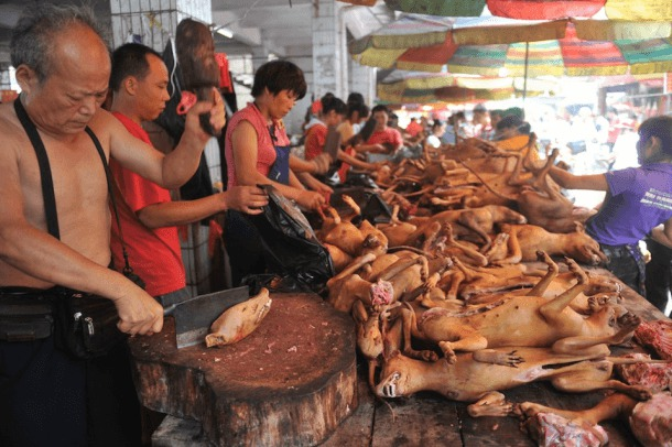 Dog-meat-festival-in-Yulin-China