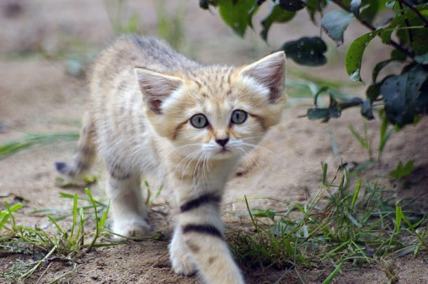 Observez, sur deux générations de chats, ils ont la même tête à 2 mois qu\u0027à  2 anscraquant pas vrai ?