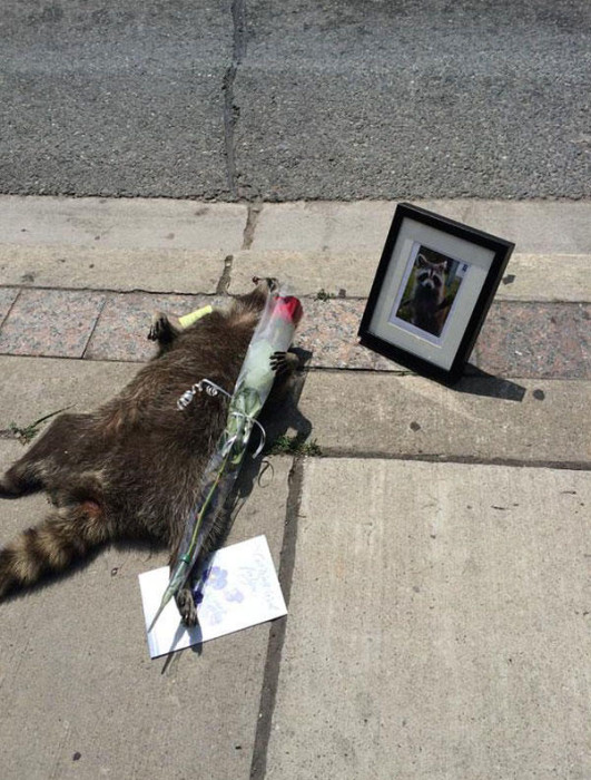 dead-raccoon-memorial-shrine-mourning-deadraccoonto-toronto-2