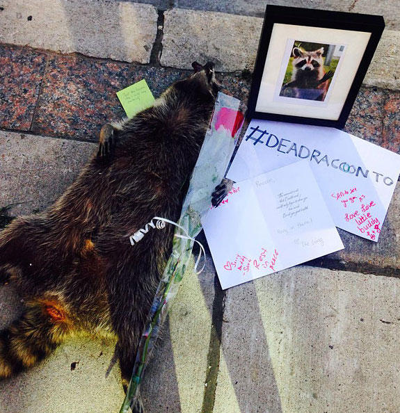 dead-raccoon-memorial-shrine-mourning-deadraccoonto-toronto-3