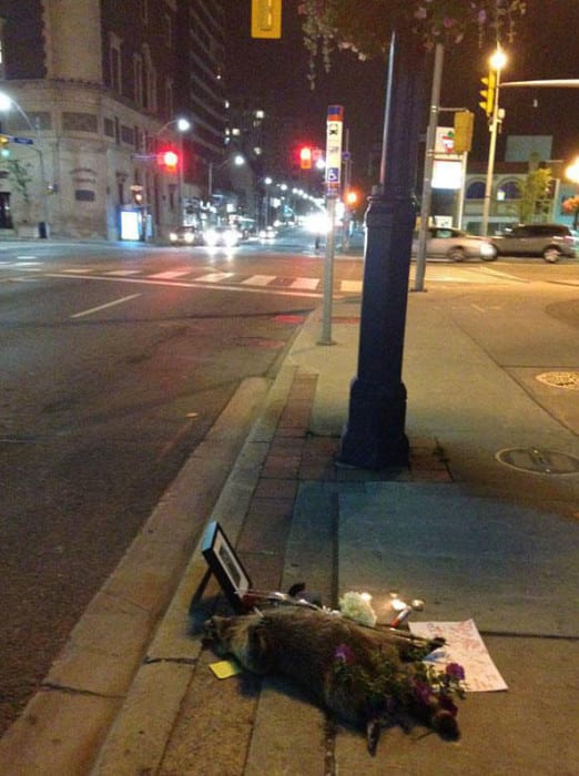 dead-raccoon-memorial-shrine-mourning-deadraccoonto-toronto-7