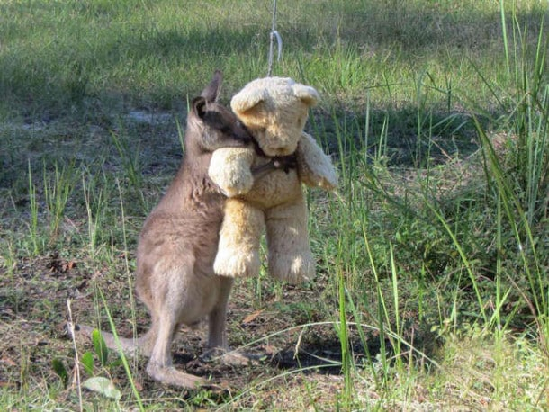 kangooro1-L.jpg