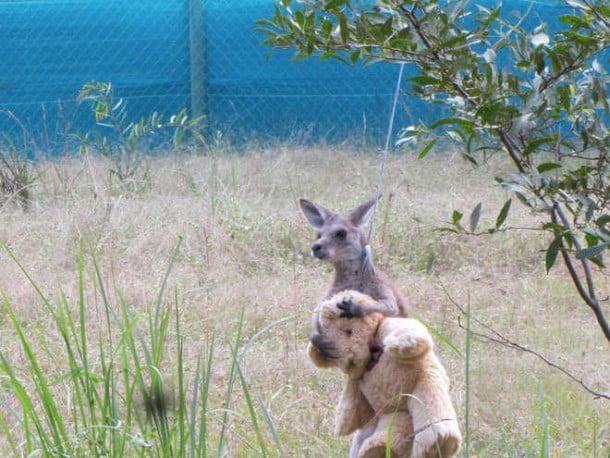 kangooro2-L.jpg